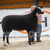 Zwartbles lot 175 sold for 2000 gns