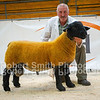 Suffolk Overall Champion lot 416 sold for 2800 gns