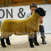 Suffolk Reserve Champion ewe lamb lot 342