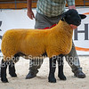 Suffolk lot 417 sold for 2300 gns