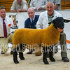 Suffolk First Prize Ram Lamb lot 416