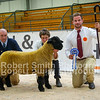 Suffolk Overall Reserve Champion ewe lamb lot 342