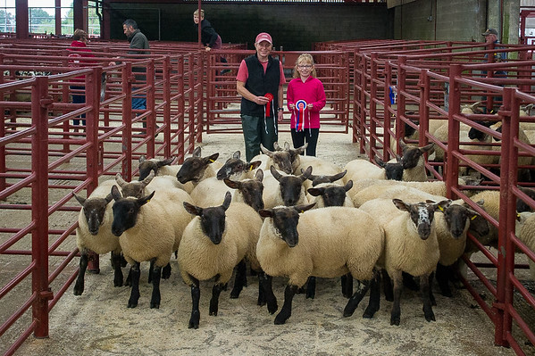 Longtown Store Sheep - August 14th 2018
