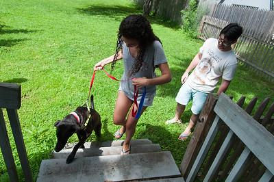 08/01/18  Wesley Bunnell | Staff  Samela Santana taps on the rear steps to her home to help Buddy, a blind 8 year old Labrador retriever, she recently adopted with Robert Genuario, R, on her way up the stairs. Due to glaucoma both of Buddy's eyes required surgery and removal while up for adoption at the Connecticut Humane Society's Newington location.