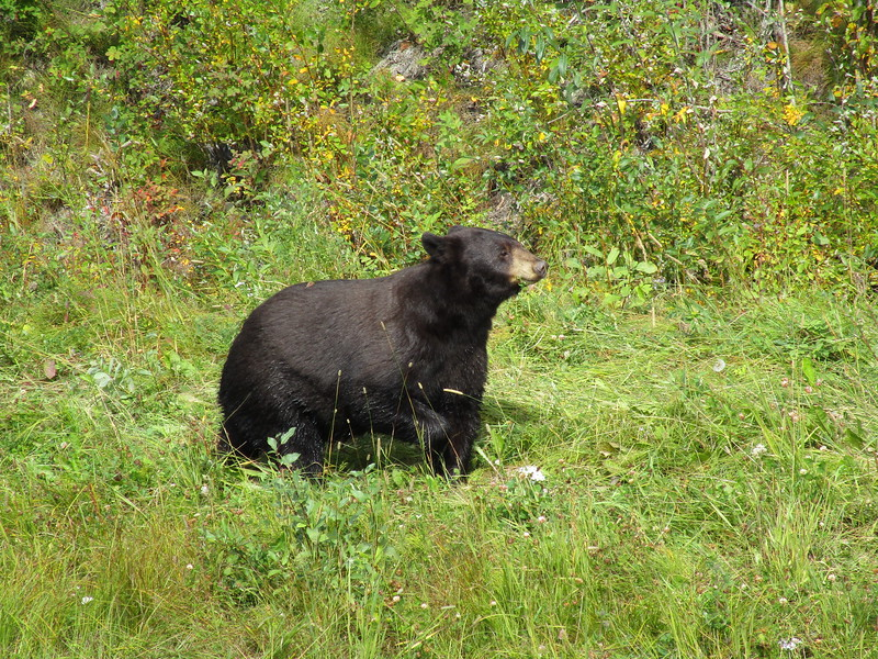 Day 5<br /> <br /> More bear sightings along the Alaska Highway.