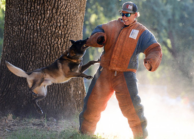 K-9 cop Aron and Officer Ed Marshall perform a demonstration during National Night Out at Capre Acres on Tuesday in Chico. (Matt Bates -- Enterprise-Record)