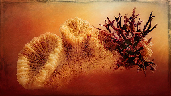 """""""Dried Coral, Bedarra Island Beach."""""""