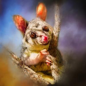 """""""Hello Possum!"""""""