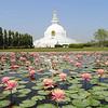 Bliss of World Peace Pagoda