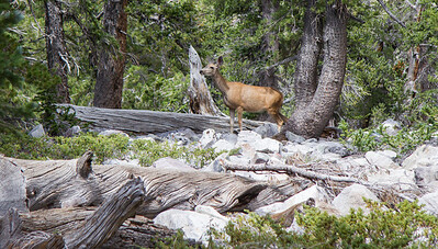 National Park Deer