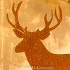The rusty antler