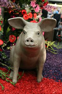 20140808-MB-Flower Parade Show Flora (17)