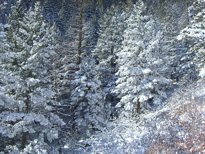 Did you know that the trees excrete snow to insulate the branches! :)