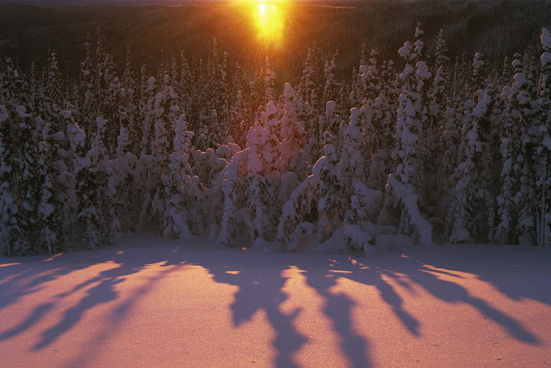 A Golden Sunrise at the Arctic Circle