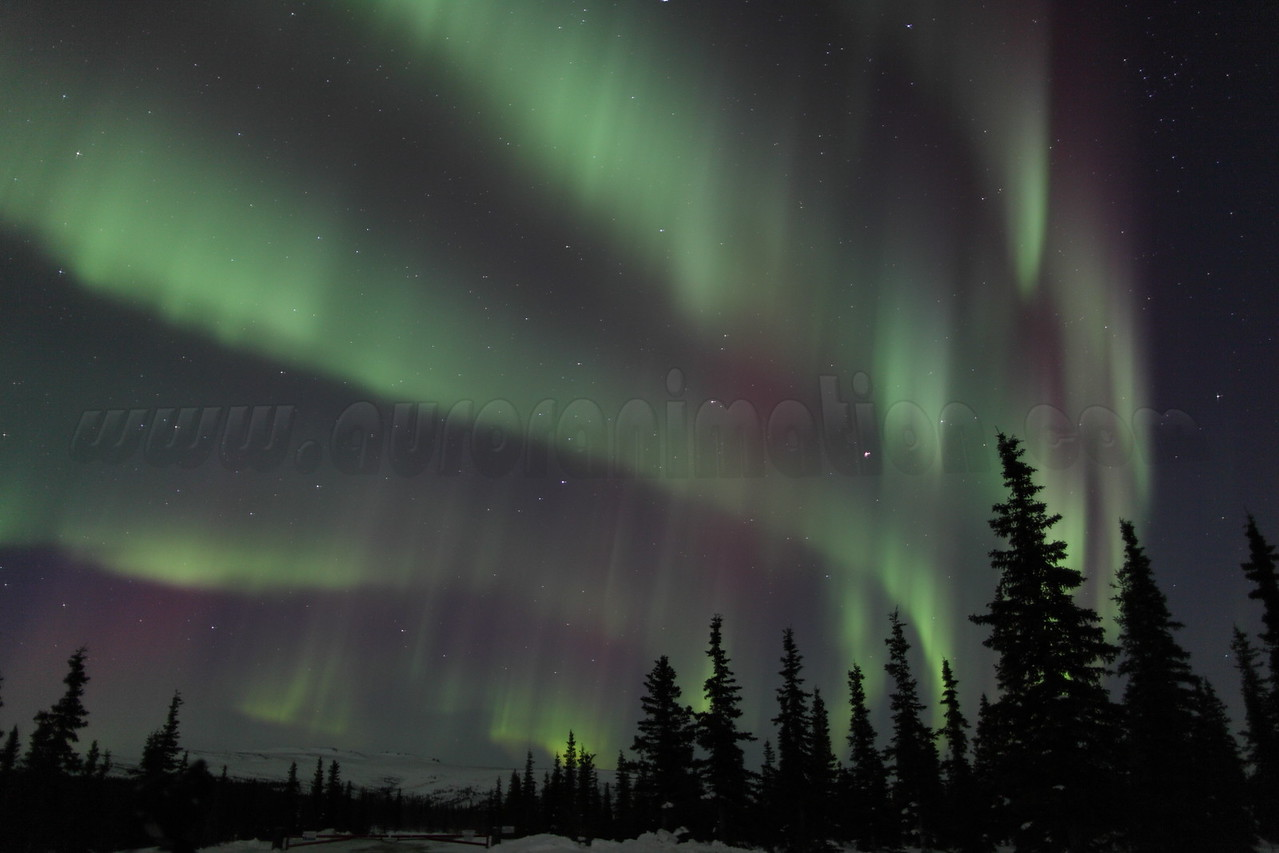 Five auroral curtains are closing in from the North and will soon sweep over the Arctic Circle in Alaska - March 16, 2013 at 11:16 PM <br /> <br /> Canon 5D MKII with EF 24mm f/1.4L II