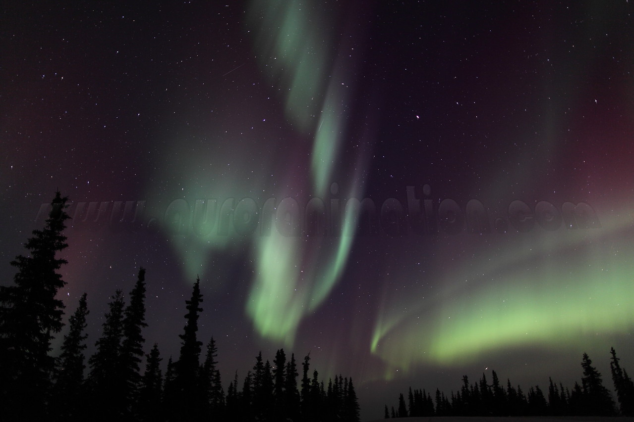 Colorful Northern Lights and Spruce Trees at 02:10 AM on March 17, 2013 - Arctic Circle, Alaska<br /> <br /> Canon 5D MKII with EF 24mm f/1.4L II
