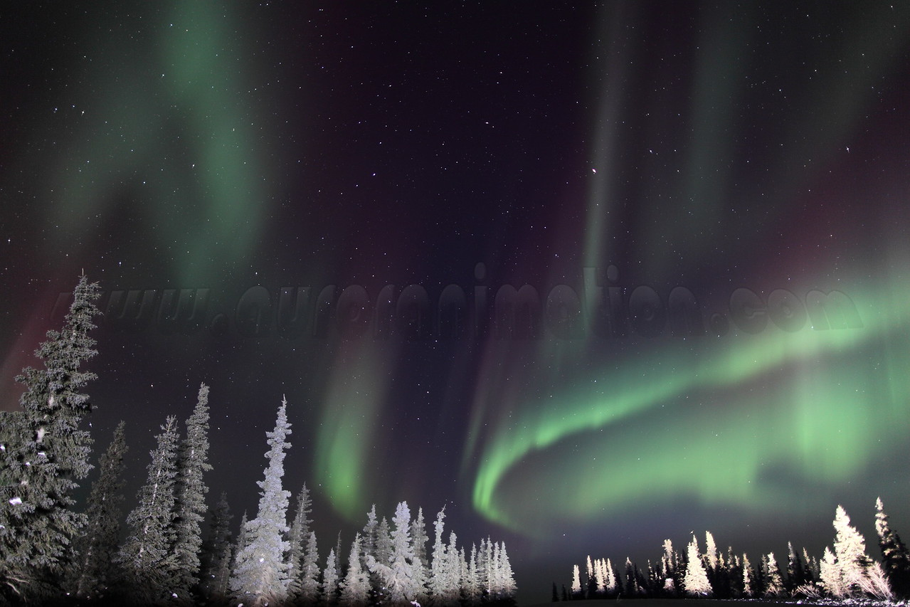 Colorful Northern Lights and Spruce Trees at 02:08 AM on March 17, 2013 - Arctic Circle, Alaska<br /> <br /> Canon 5D MKII with EF 24mm f/1.4L II