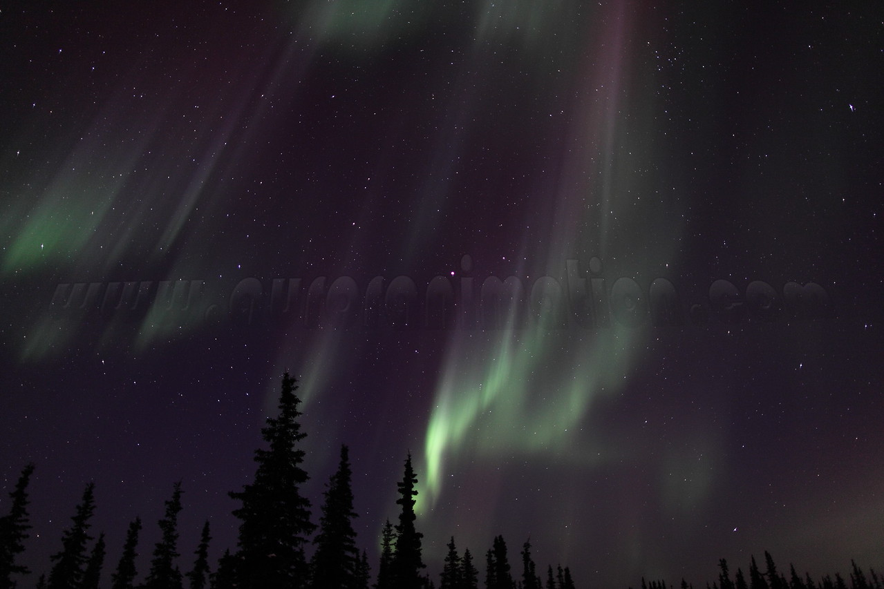 Colorful Northern Lights at the Arctic Circle in Alaska on March 17, 2013 - 00:58 AM<br /> <br /> Canon 5D MKII with EF 24mm f/1.4L II
