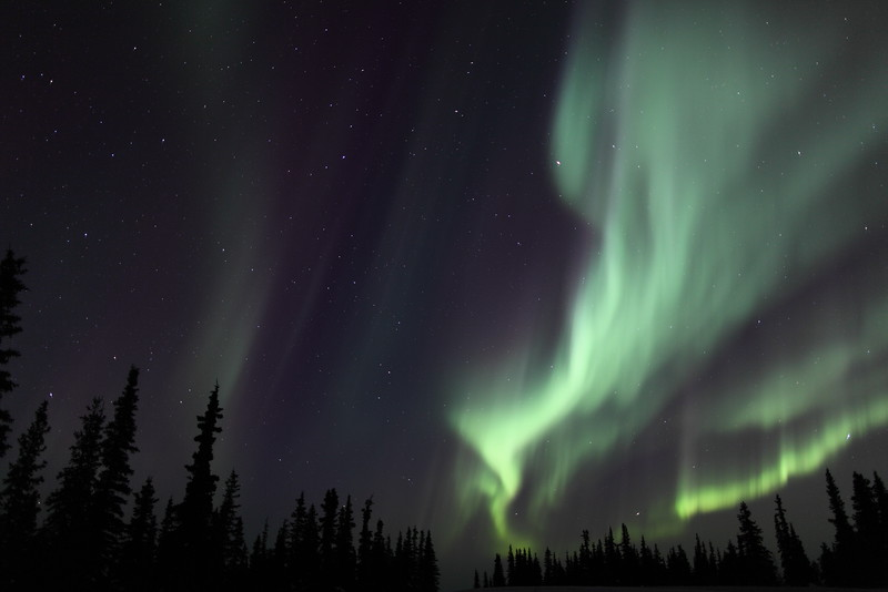 Multiple auroral curtains and Spruce Trees at 02:19 AM on March 17, 2013 - Arctic Circle, Alaska<br /> Photo Dimensions: 1620x1080<br /> Canon 5D MKII with EF 24mm f/1.4L II