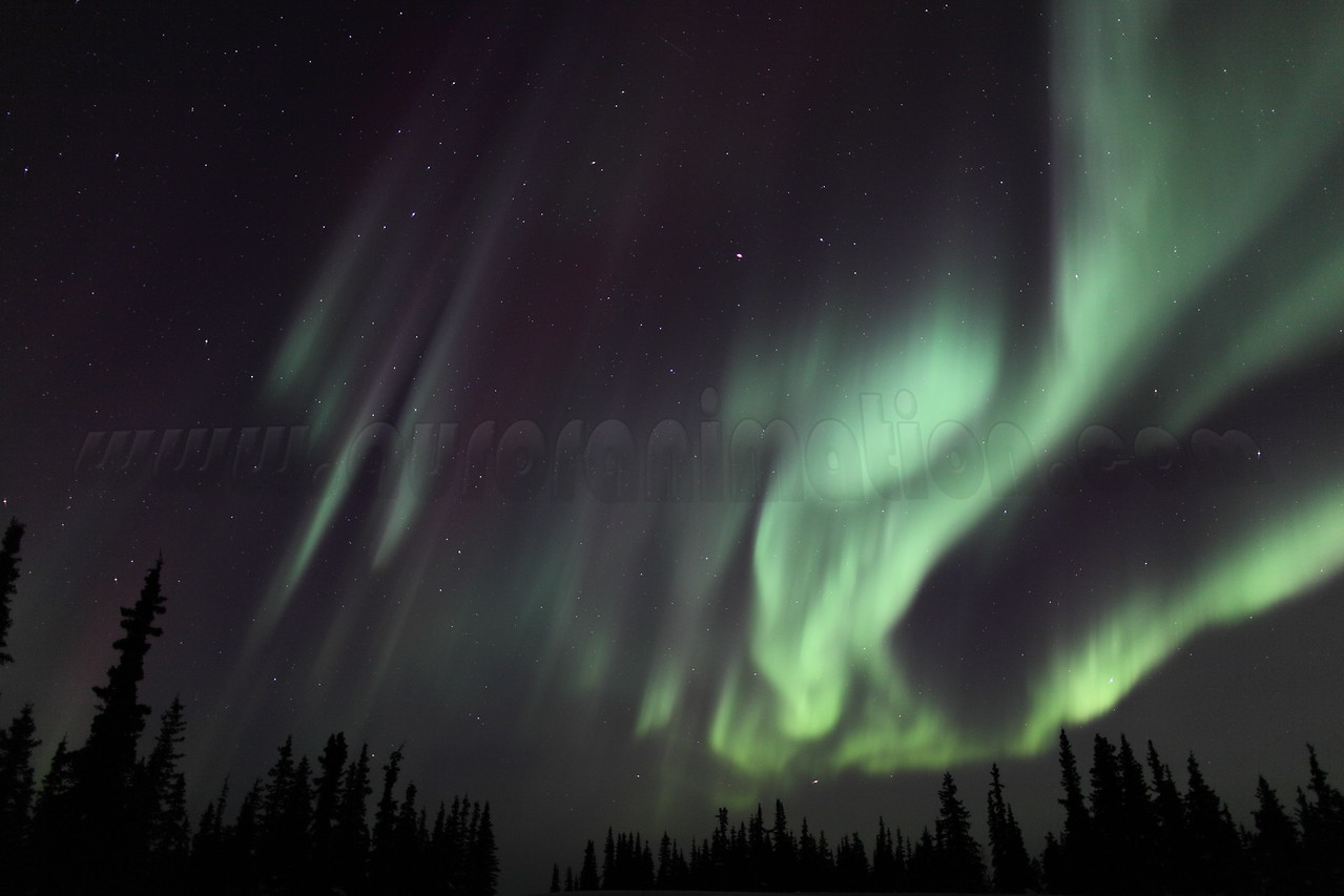 Colorful auroral curtains and Spruce Trees at 02:22 AM on March 17, 2013 - Arctic Circle, Alaska<br /> <br /> Canon 5D MKII with EF 24mm f/1.4L II