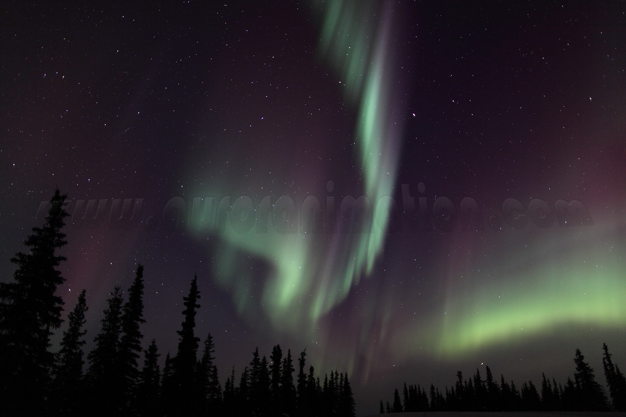 Colorful Northern Lights and Spruce Trees at 02:11 AM on March 17, 2013 - Arctic Circle, Alaska<br /> <br /> Canon 5D MKII with EF 24mm f/1.4L II