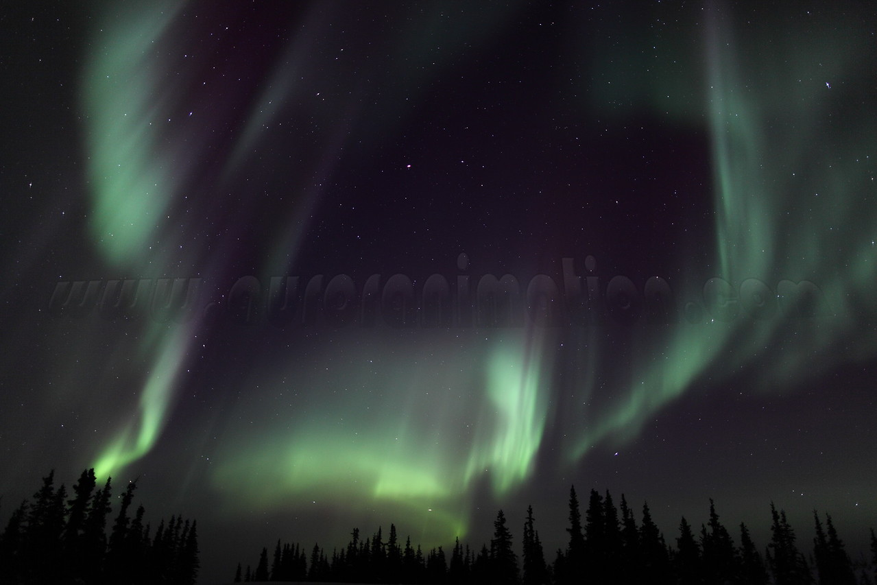 Colorful auroral curtains and Spruce Trees at 02:27 AM on March 17, 2013 - Arctic Circle, Alaska<br /> <br /> Canon 5D MKII with EF 24mm f/1.4L II