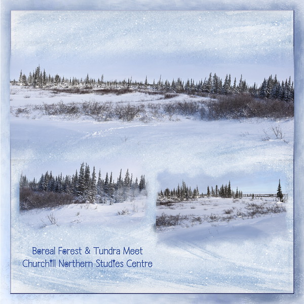 Boreal Forest & Tundra Meet