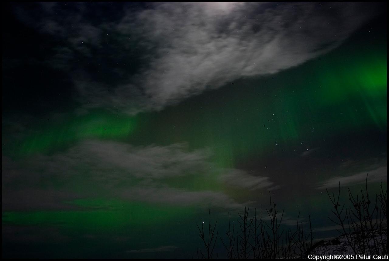 Northern Lights (#3243)