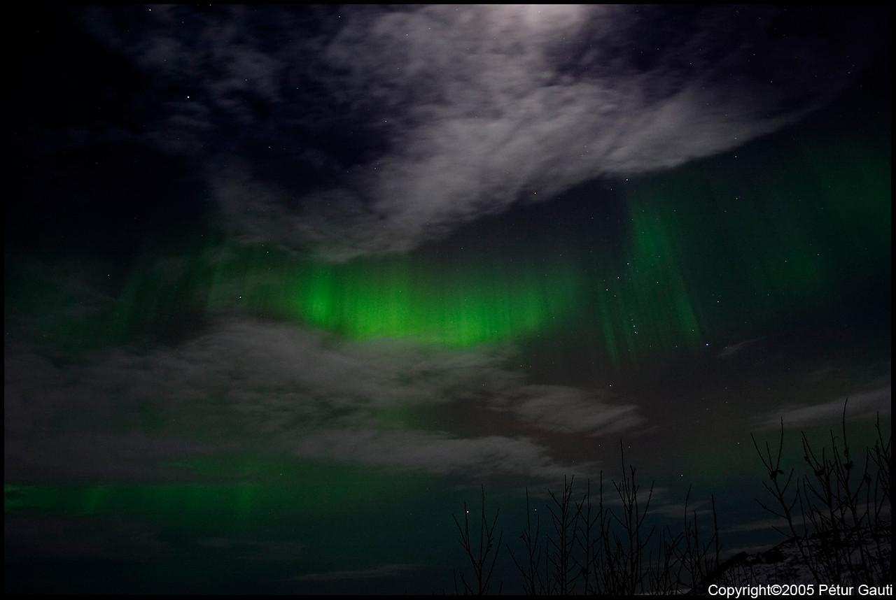 Northern Lights (#3238)