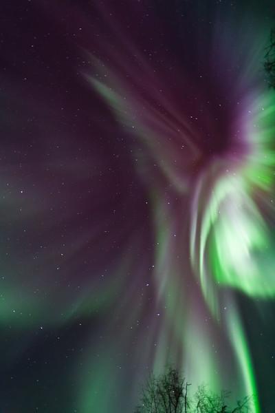 Aurora in Flight