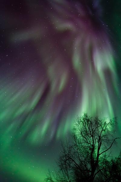 Aurora Embrace-1
