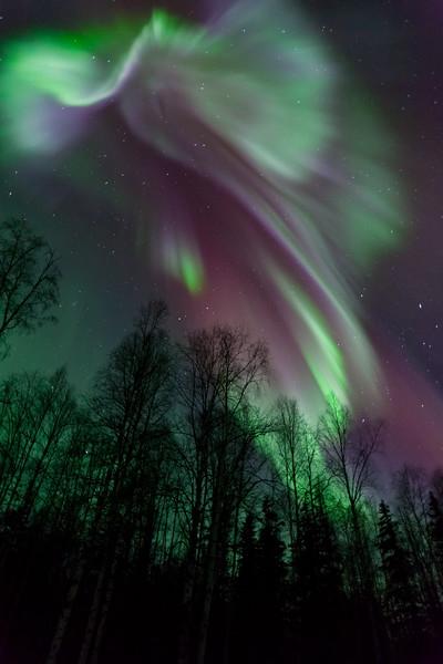 Epic Aurora-1