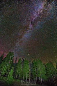 """Meeting of the Trees,"" The Aurora Borealis and  Milky Way over Lodgepole Pines Pines, Yellowstone National Park"