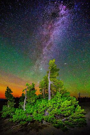 The Aurora Borealis, Andromeda Galaxy and Milky Way over Whitebark Pines, Crater Lake National Park