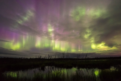 Stormy aurora colors over marsh, Northwest Territories Canada