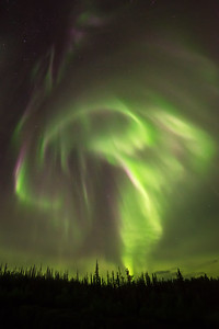 Aurora corona over trees, Ingraham trail Canada