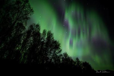 Aurora in 3D