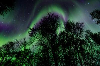 Aurora Aura