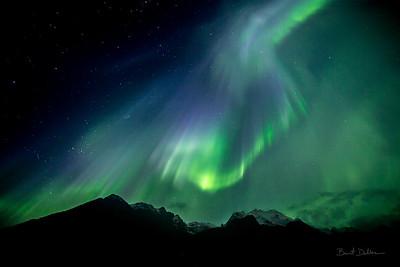Pioneer Aurora