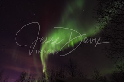 Aurora, North Pole, AK on 2/19/14