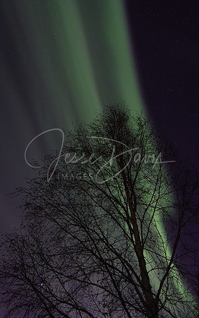Aurora, North Pole, AK on 2/21/14
