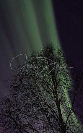 Aurora, North Pole, AK on 2/21/14