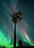 Tree in Solar Storm, Norway