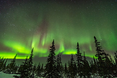 Aurora and Boreal Forest (March 14, 2020)