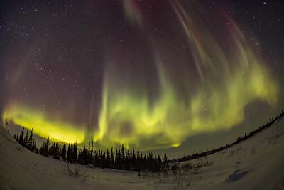 Aurora Pillars to the Zenith