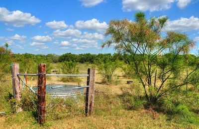 Chavez Ranch Longhorns  Reduced