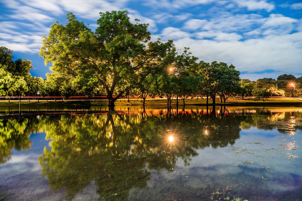Lake Austin Trees