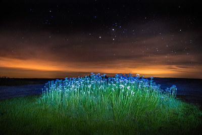 Milky Flowers