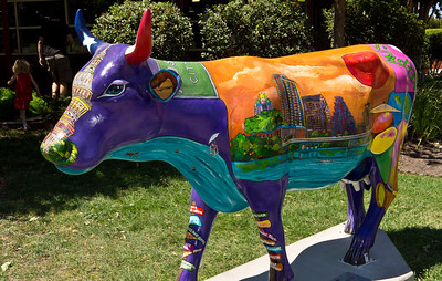 The painted cows around Austin