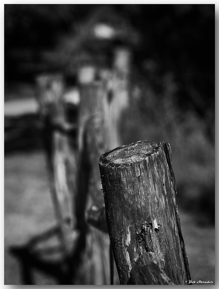 Rough Hewn Fence